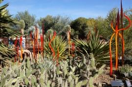 The Desert and Chihuly: Botanical Garden, Phoenix